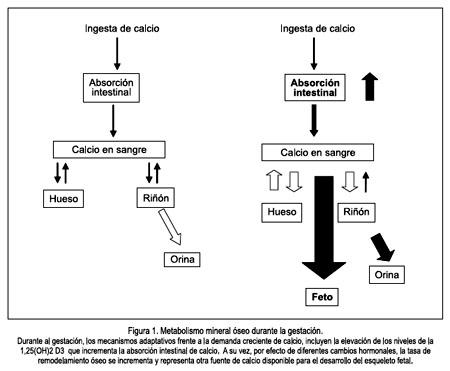 Metabolismo insulina chupa Pero es más probable que tenga que saber extra por eso que eso