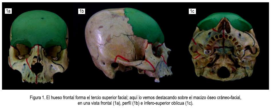 huesos de la orbita