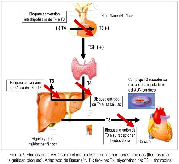 Disfunción tiroidea inducida por amiodarona en la práctica clínica