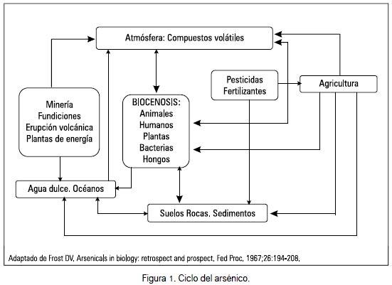 Exposición ocupacional y ambiental al arsénico: actualización bibliográfica  para investigación científica