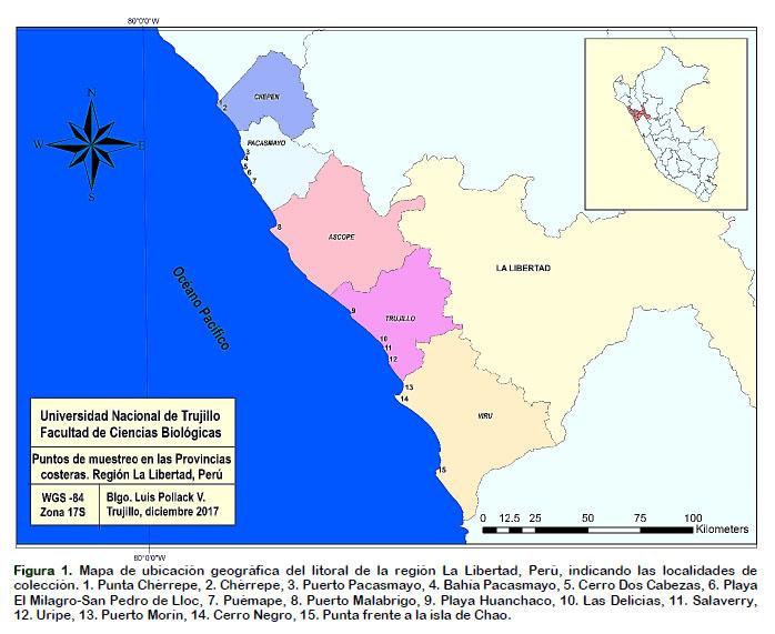 Algas Marinas Del Litoral De La Region La Libertad Peru