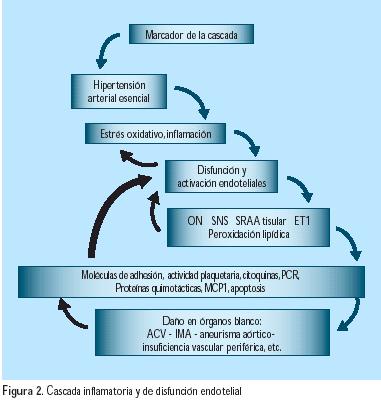 Fisiología de la Hipertensión Arterial esencial
