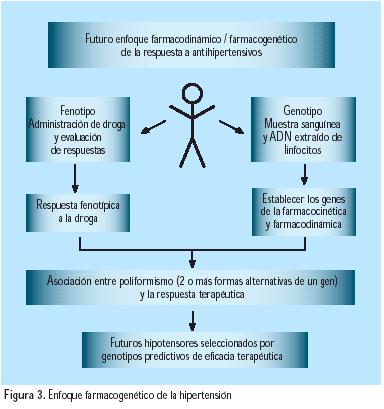 hipertension arterial monografia: