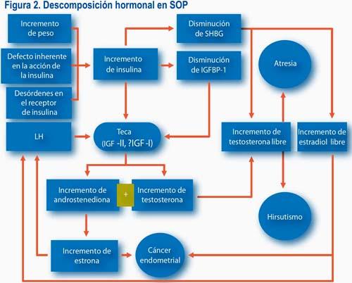 Resistencia a la insulina y acción insulínica