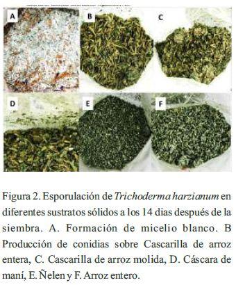 Optimización de sustratos para la producción de conidias de