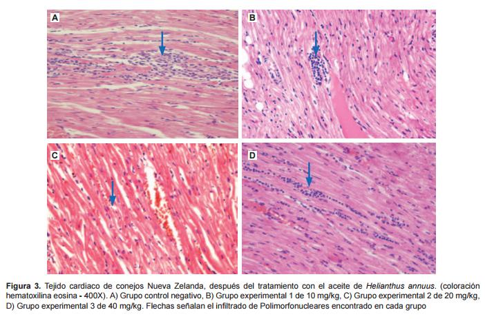 Efecto protector de Helianthus annuus (girasol) sobre el infarto de ...