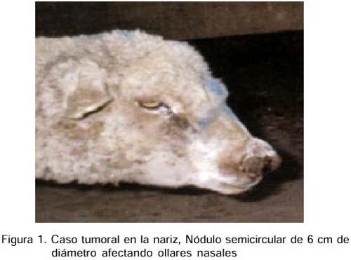 Procesos proliferativos en la Región Cefálica de los ovinos
