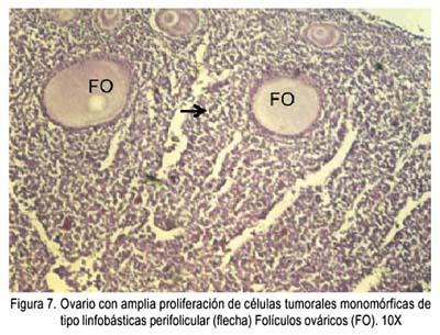 leukosis sarcoma aviar pdf
