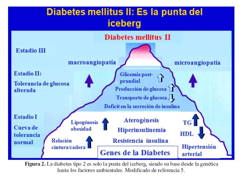 Diabetes Mellitus Tipo 2 Y Resistencia A La Insulina