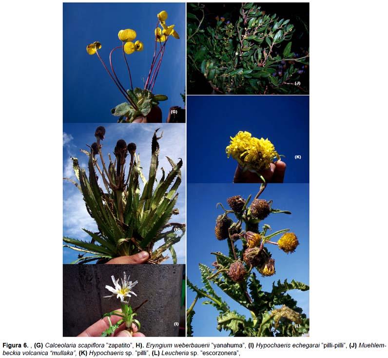 de plantas medicinales expendidas en los mercados de la ciudad del