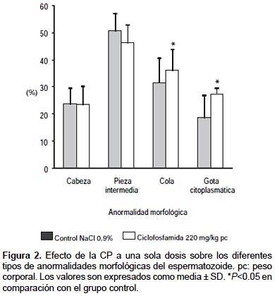 Dosis única de ciclofosfamida disminuye la calidad espermática y el ...