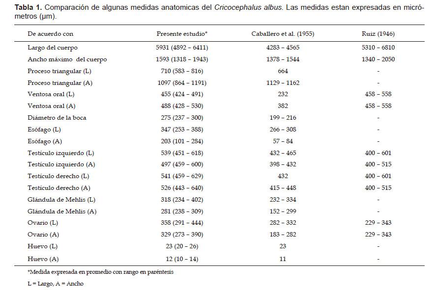 Primer reporte de Cricocephalus albus (Digenea: Pronocephalidae) en ...